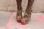 Mega leopard